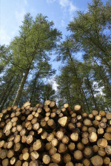 Landclearing Ghent Wood Products